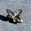 Leaf on slate