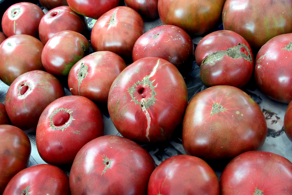 . Shown here are Heirloom Carbon Tomatoes, the kind Kimball Fruit Farm owner Carl Hills won an award for best tasting tomato. Nashoba Valley Voice Photo by David H. Brow