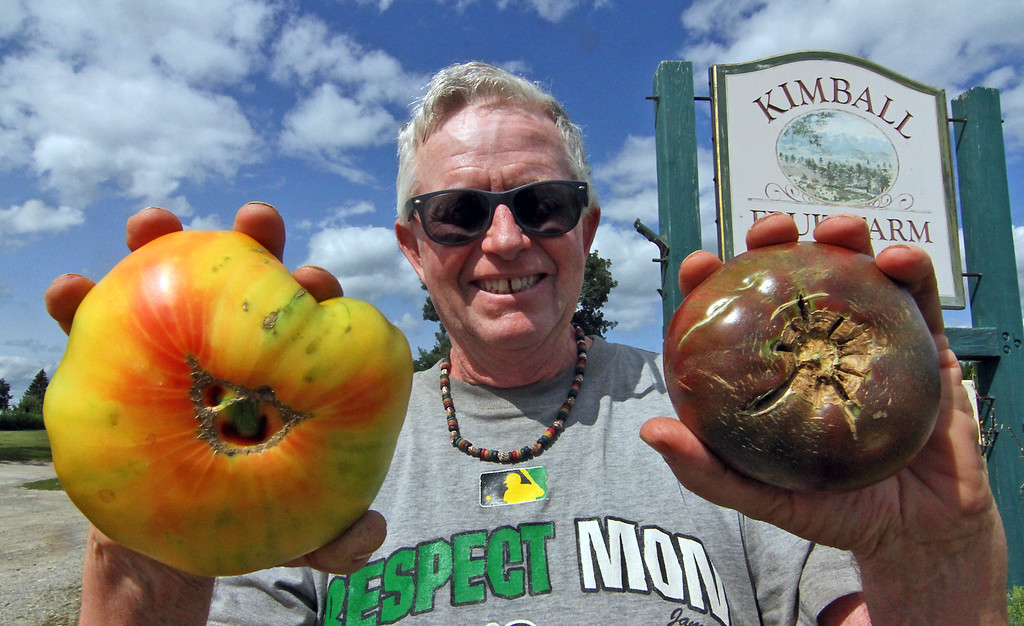 . Carl Hills, owner of Kimball Fruit Farm in Pepperell, holds two of his prize winning tomatoes, Pineapple Tomato on left and Carbon Heirloom on right. Nashoba Valley Voice Photo by David H. Brow