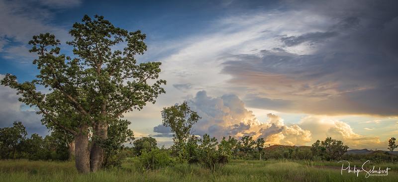 Kimberley Evening