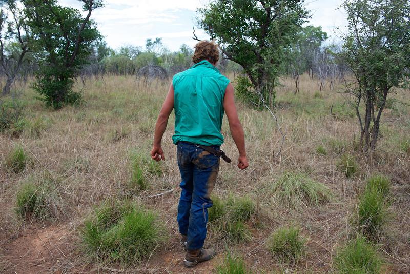 """Jackaroo (cow-boy australien) reprenant ses esprits après être tombé de cheval pendant le mustering sur les terres de """"Meda Station"""". Kimberley/Australie Occidentale/Australie"""