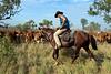 """Déplacement d'un troupeau en période de mustering sur les terres de """"Meda Station"""". Kimberley/Australie Occidentale/Australie"""