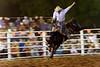 L'un des concurrents du rodéo de Kununurra en action. Kimberley/Australie Occidentale/Australie
