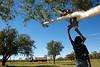 Enfant perché sur un arbre pour observer la route à la sortie de Fitzroy Crossing. Kimberley/Australie Occidentale/Australie