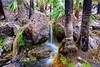 Les sources chaudes de Zebedee Springs près d'El Questro Station. Kimberley/Australie Occidentale/Australie