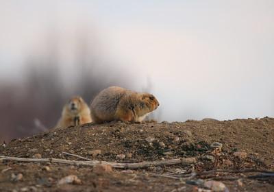 Protectors Of The Prairie