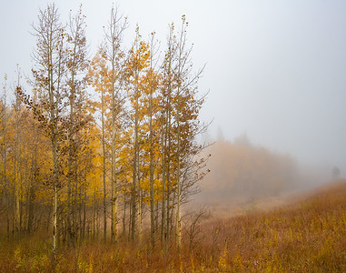 Fall and Fog In Colorado
