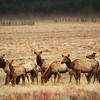 Elk View