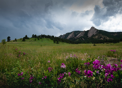 Stormy Flat Irons and Flowers