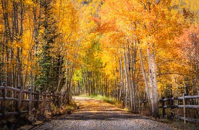 A Walk Through Gold