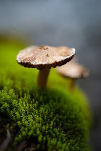 Mushroom Meditation