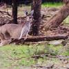 Bounding Kangaroos