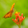 Flame Butterfly