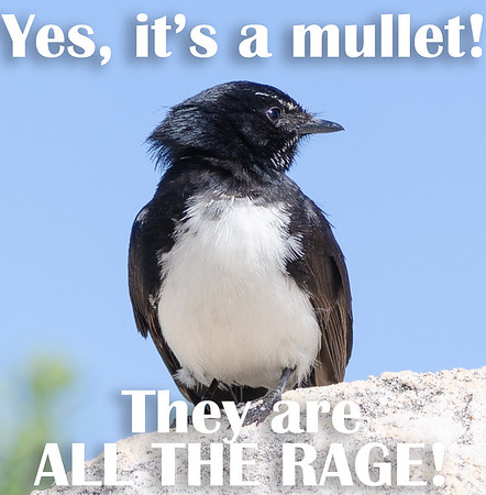 Yes, it's a mullet!  They are ALL THE RAGE!