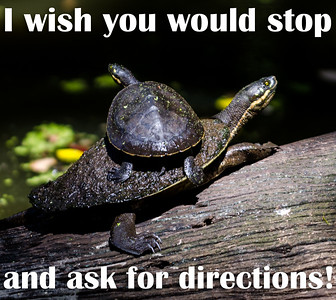 I wish you would stop and ask for directions!