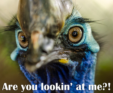 Are you lookin' at me?!?