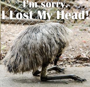 I'm sorry.  I Lost My Head!