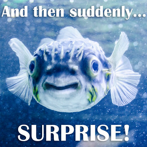 And then suddenly... SURPRISE!