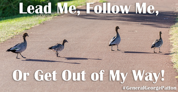 Lead Me, Follow Me, or Get Out of My Way!
