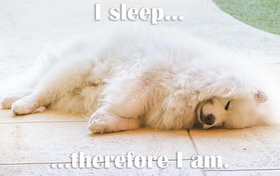 I sleep... therefore I am.