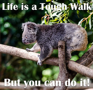 Life is a Tough Walk.  But you can do it!