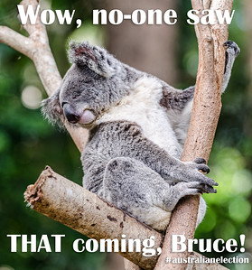 Wow, no-one saw THAT coming, Bruce!