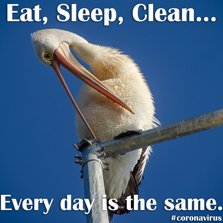 Eat, Sleep, Clean... Every day is the same.