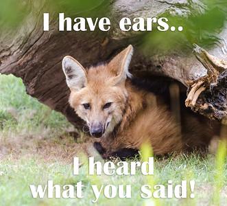 I have ears!  I heard what you said!