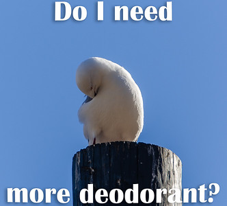 Do I need more deodorant?