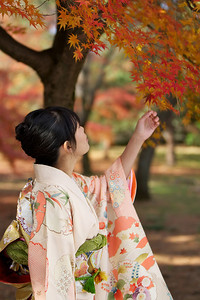 Young Japanese Woman in Kimono from side admiring Autumn Foliage