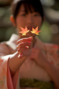 Beautiful Young Japanese Woman in Kimono showing Momiji leafs