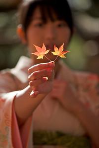 Beautiful Young Japanese Woman in Kimono showing Momiji leafs