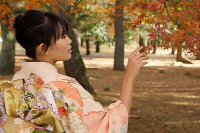 Kimono Girl admiring autumn maple leafs  Beautiful Young Japanese Woman in Kimono admiring Autumn Foliage