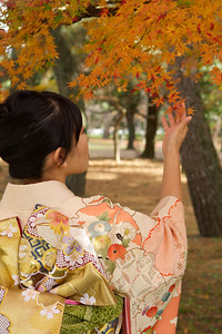 Kimono - Obi - maple leafs  Young Japanese Woman in Kimono from back admiring Autumn Foliage
