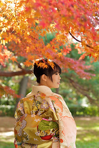 Kimono - Obi - maple tree  Beautiful Young Japanese Woman in Kimono from back with Autumn Foliage