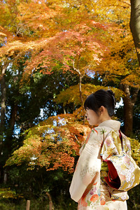 Young Japanese in Kimono  Showing Obi, looking at Autumn Foliage