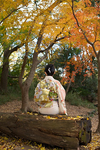 Young Japanese in beautiful Kimono with Obi, back side  Sitting on a wooden Bench in Autumn Parc