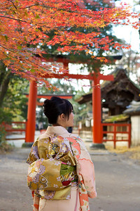 Young Japanese walking to Shinto Shrine  Dressed up in Kimono with Obi