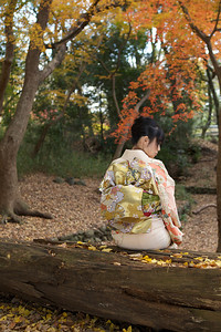 Young Japanese sitting in Kimono in Autumn Parc  Showing her Back with beautiful Obi