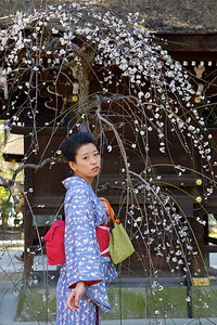 Young Japanese dressed in Kimono under plum blossoms  At Kitano Tenmangu Shrine in Spring