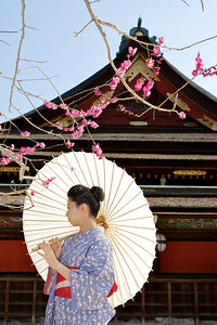 Beautiful Woman with Kimono  Posing with Parasol in Front of Temple with Spring Blossoms