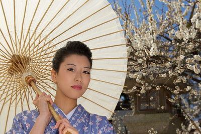 Portrait of Young Japanese in Kimono  Holding Parasol, in Front of Spring Blossoms