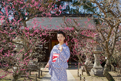 Spring Blossoms and Young Japanese in Kimono