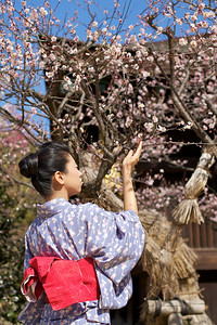 Beautiful Woman with Kimono  Kimono - Obi - spring blossoms