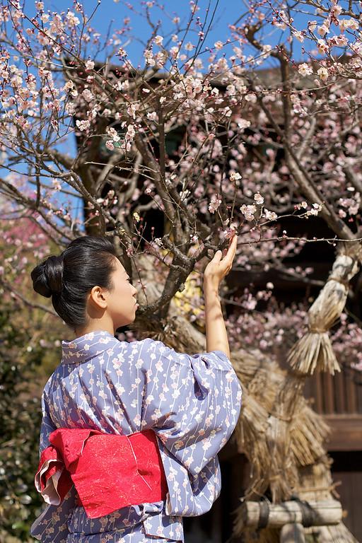 Beautiful Woman with Kimono  Kimono - Obi - spring blossoms