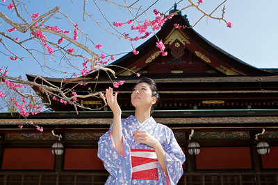 Beautiful Woman with Kimono  Admiring plum blossoms in front of Temple