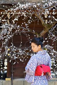 Spring Time at Kitano Tenmangu Shrine, Kyoto  Japanese in Kimono with Plum Blossoms