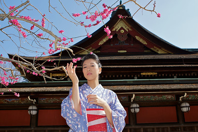 Beautiful Woman with Kimono   Spring Blossoms and Temple