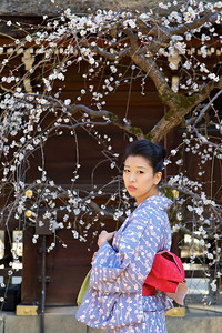 Japanese dressed in Kimono at Kitano Tenmangu Shrine, Kyoto  Spring Time with Plum Blossoms