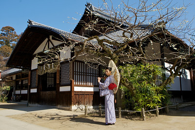 Kimono Girl in Front of Traditional Japanese House  Posing with Parasol unter Plum Tree